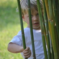 WHY US? | Thigpen Trail Bamboo Farm